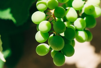 A cluster of grapes