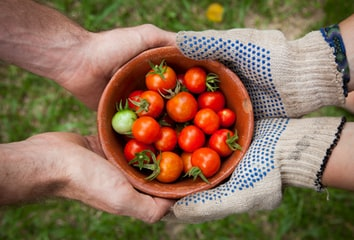 Two pairs of hands holding a cup of tomatoes.