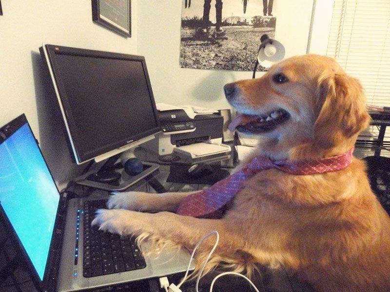 Doggo at a computer
