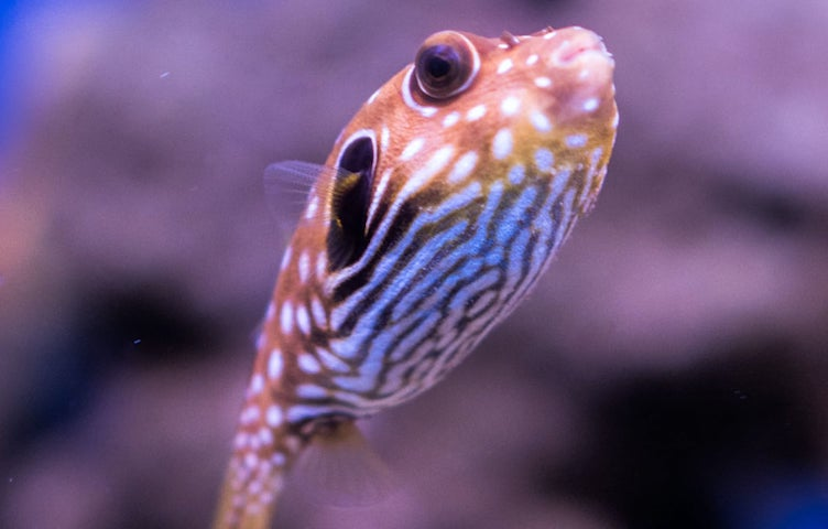 An image of a fish.