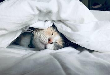 Cat sleeping. Photo by Kate Stone Matheson on Unsplash.
