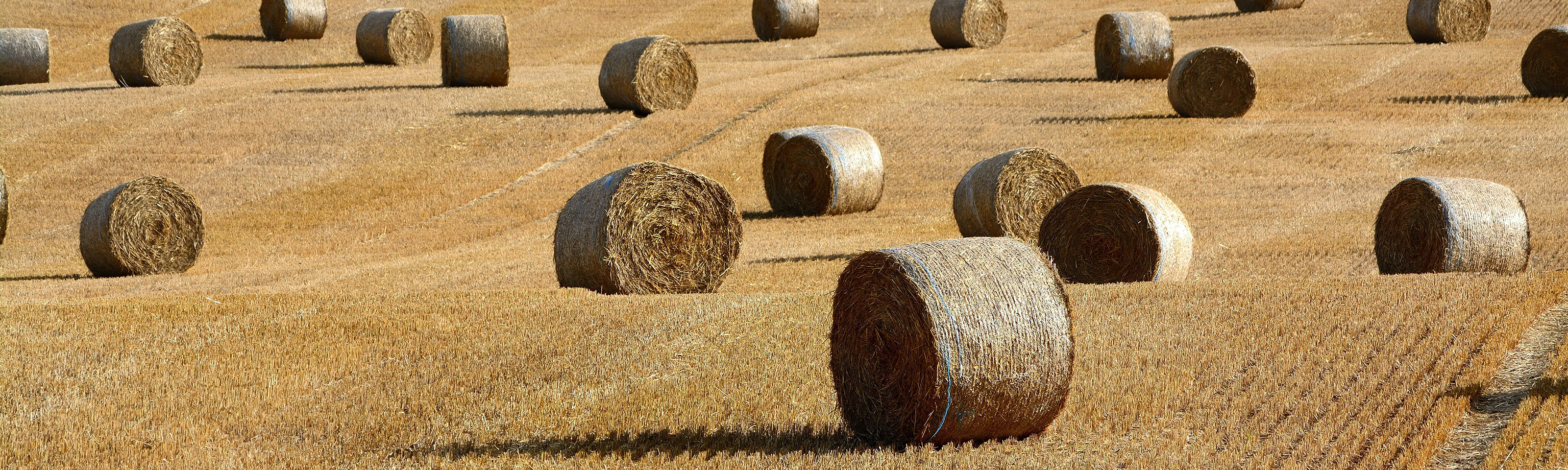 A photo of a fallow field in late fall, with many hay bales strewn about.