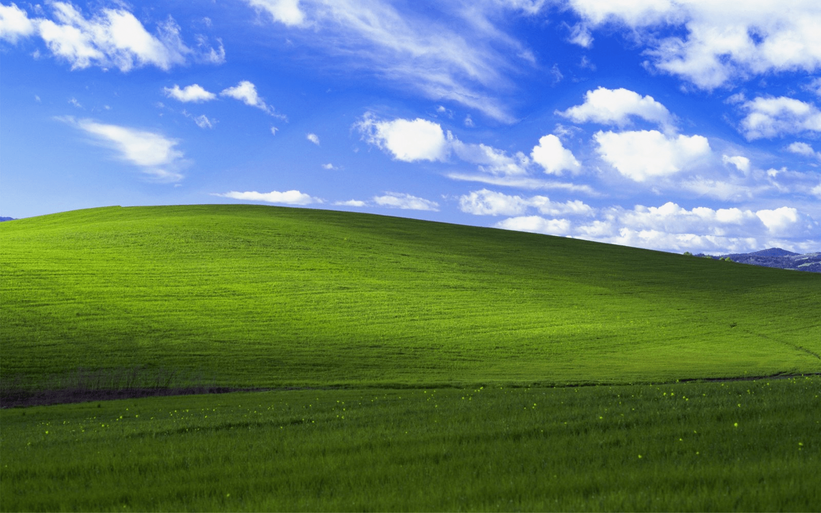 The iconic Windows XP green grass background image.